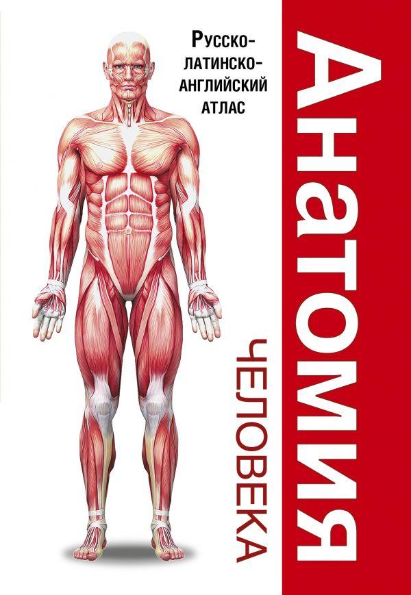 Палычева Л.Н., Лазарев Н.В. «Анатомия человека. Русско-латинско-английский атлас»