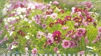 Календарь-2013(кв.мини)Цветы Арт. 03.1.309