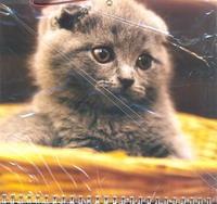 Календарь-2013(кв.тр.спр)Котенок 01.4.12