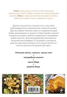Обложка сзади Опята круглый год Матанцев А.Н., Матанцева С.Г.