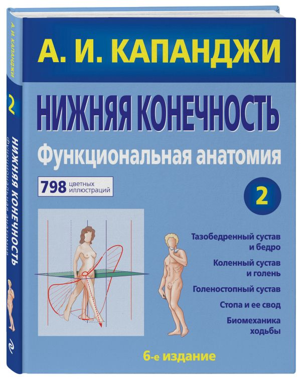 Нижняя конечность: Функциональная анатомия Капанджи А.И.