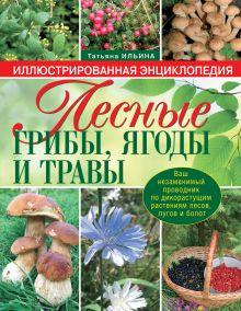 Ильина Т.А. - Лесные грибы, ягоды и травы обложка книги