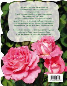 Обложка сзади Розы