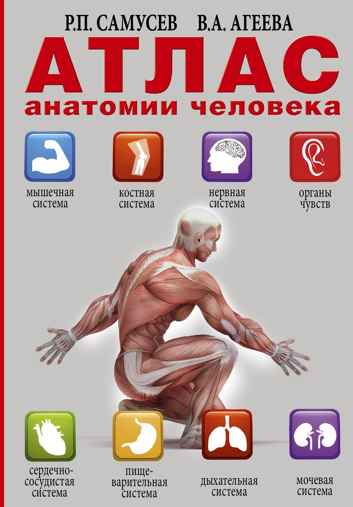Самусев Р.П. Атлас анатомии человека анна спектор большой иллюстрированный атлас анатомии человека