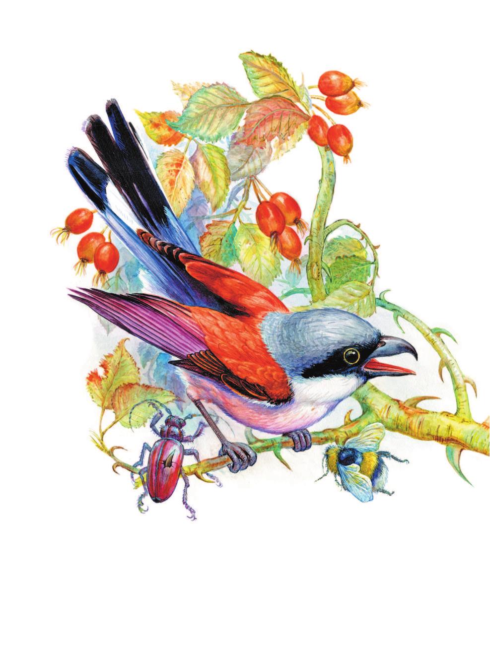 проявляется местно, картинки звери и птицы на книжных страницах можете убедиться