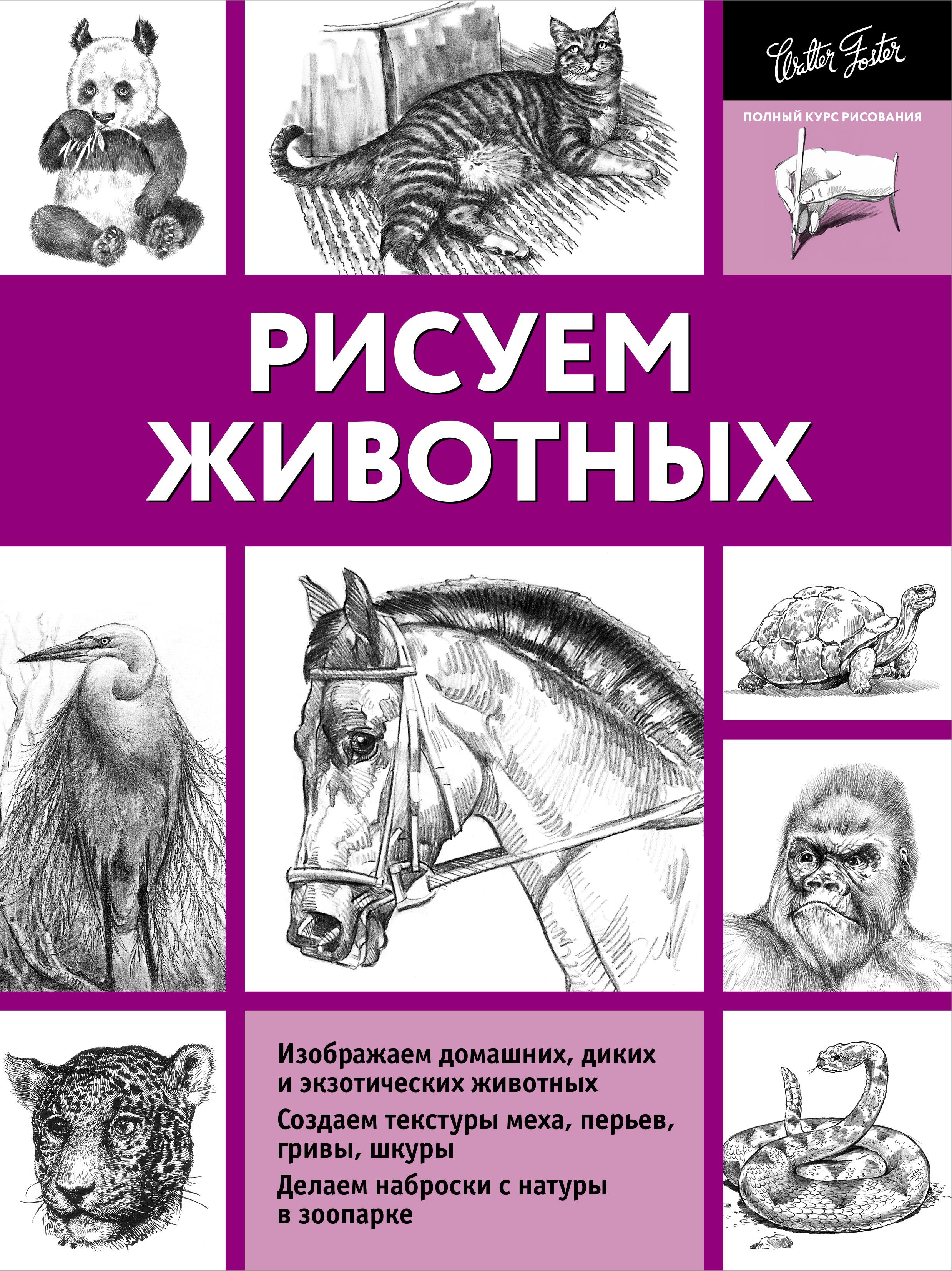 Рисуем животных ( Степанова А.Н.  )