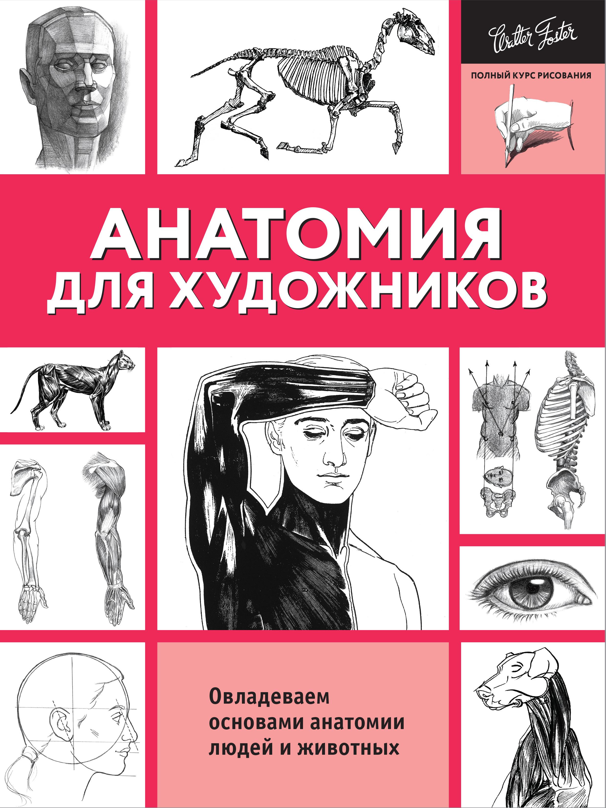 . Анатомия для художников шилкин в филимонов в анатомия по пирогову атлас анатомии человека том 1 верхняя конечность нижняя конечность cd