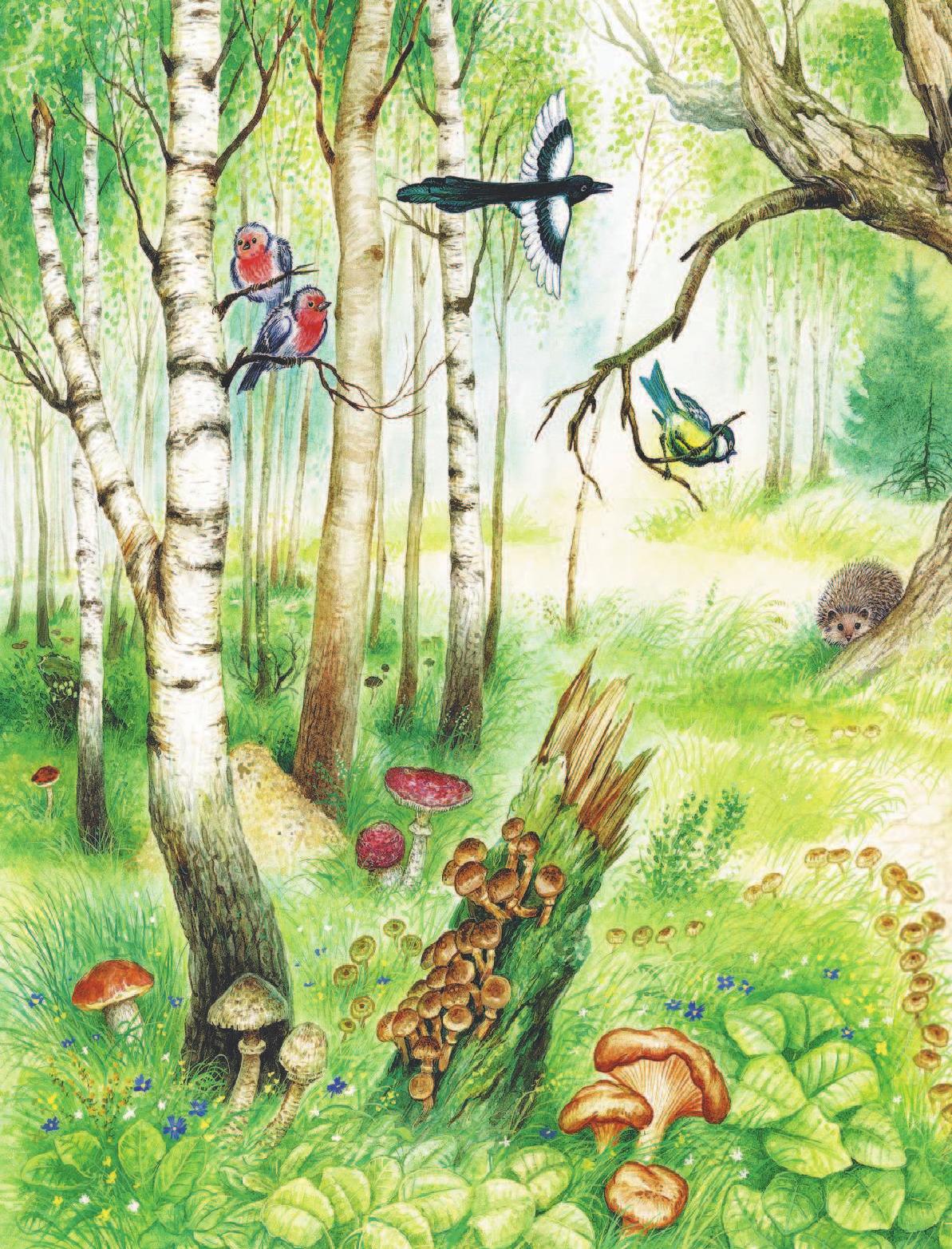 лесные картинки рассказ активной приманке более