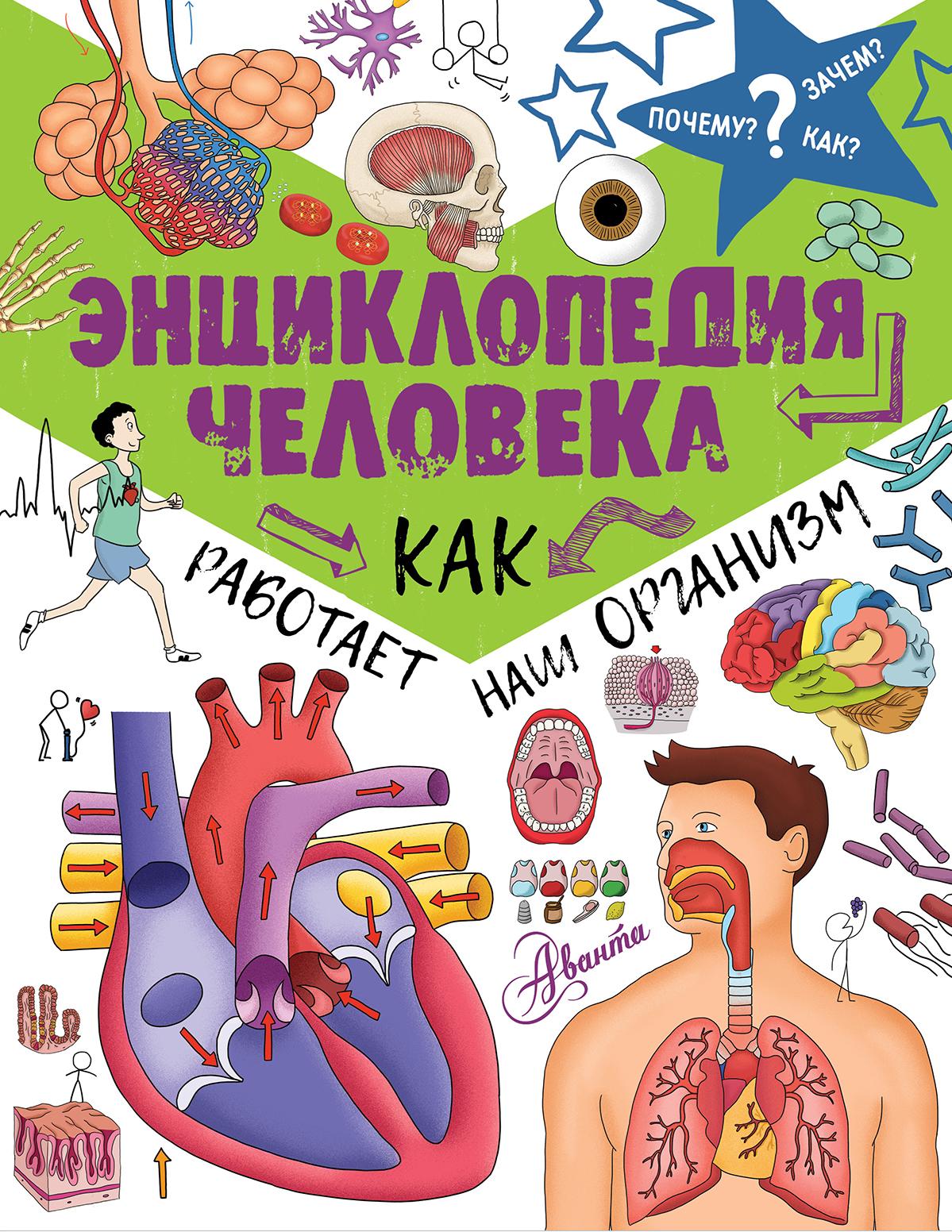 Энциклопедия человека: как работает наш организм ( .  )