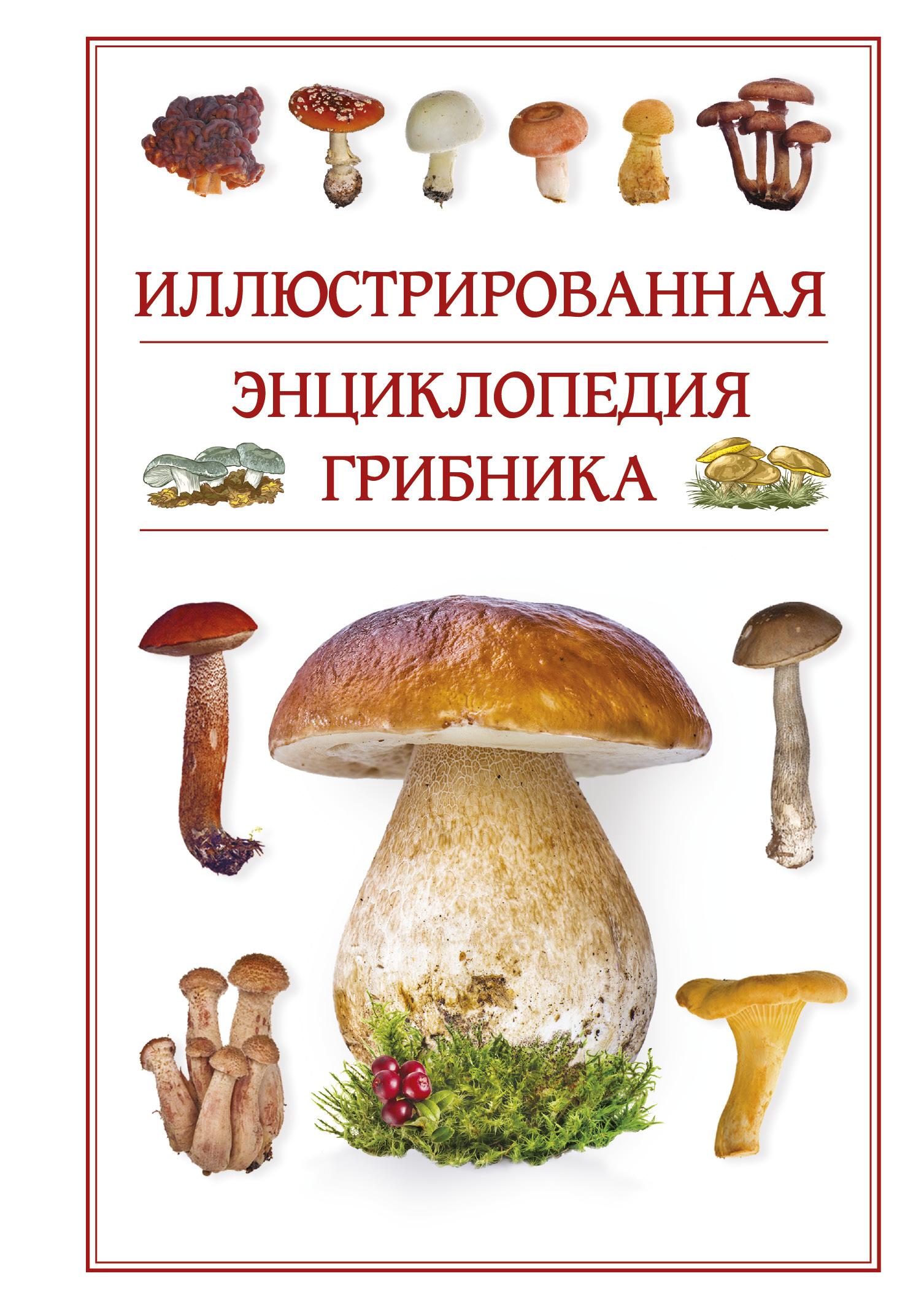 справочник грибника с картинками есть