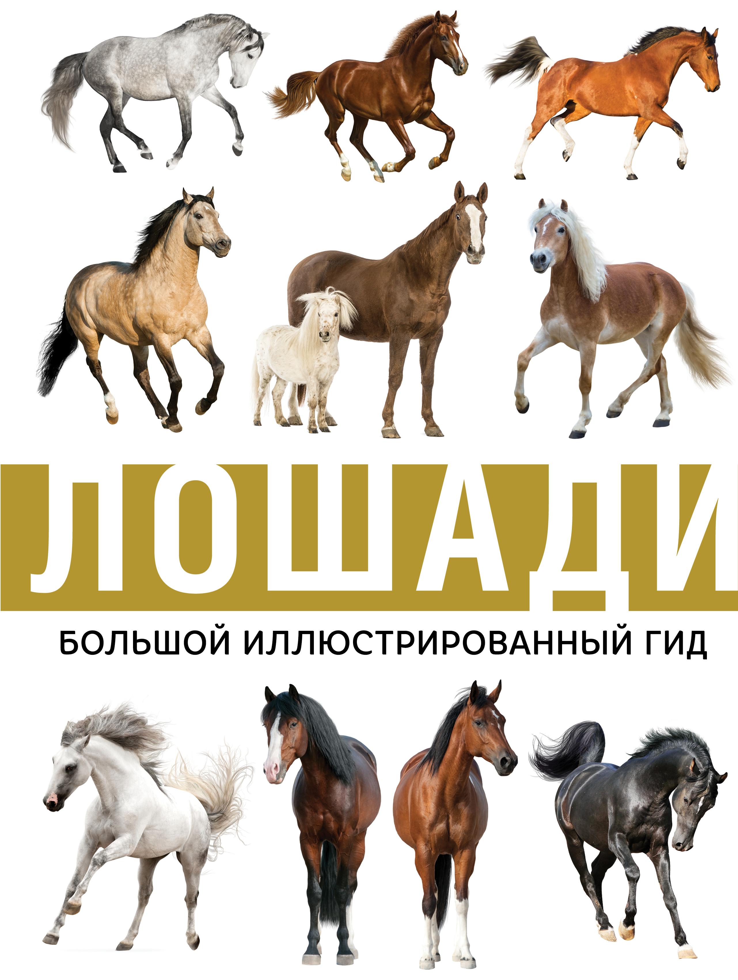 Книга с картинками о лошадях