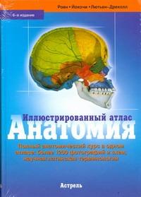 Роен Й.В. - Анатомия обложка книги