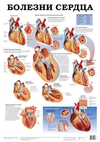 Болезни сердца. Болезни мочевых органов Махиянова Е.Б.