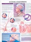 Болезнь Альцгеймера. Эпилепсия