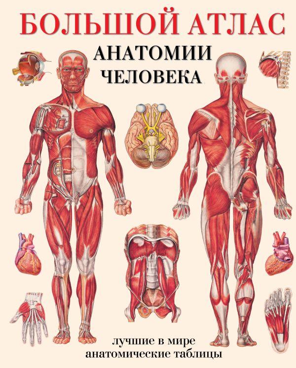 Большой атлас анатомии человека Махиянова Е.Б.