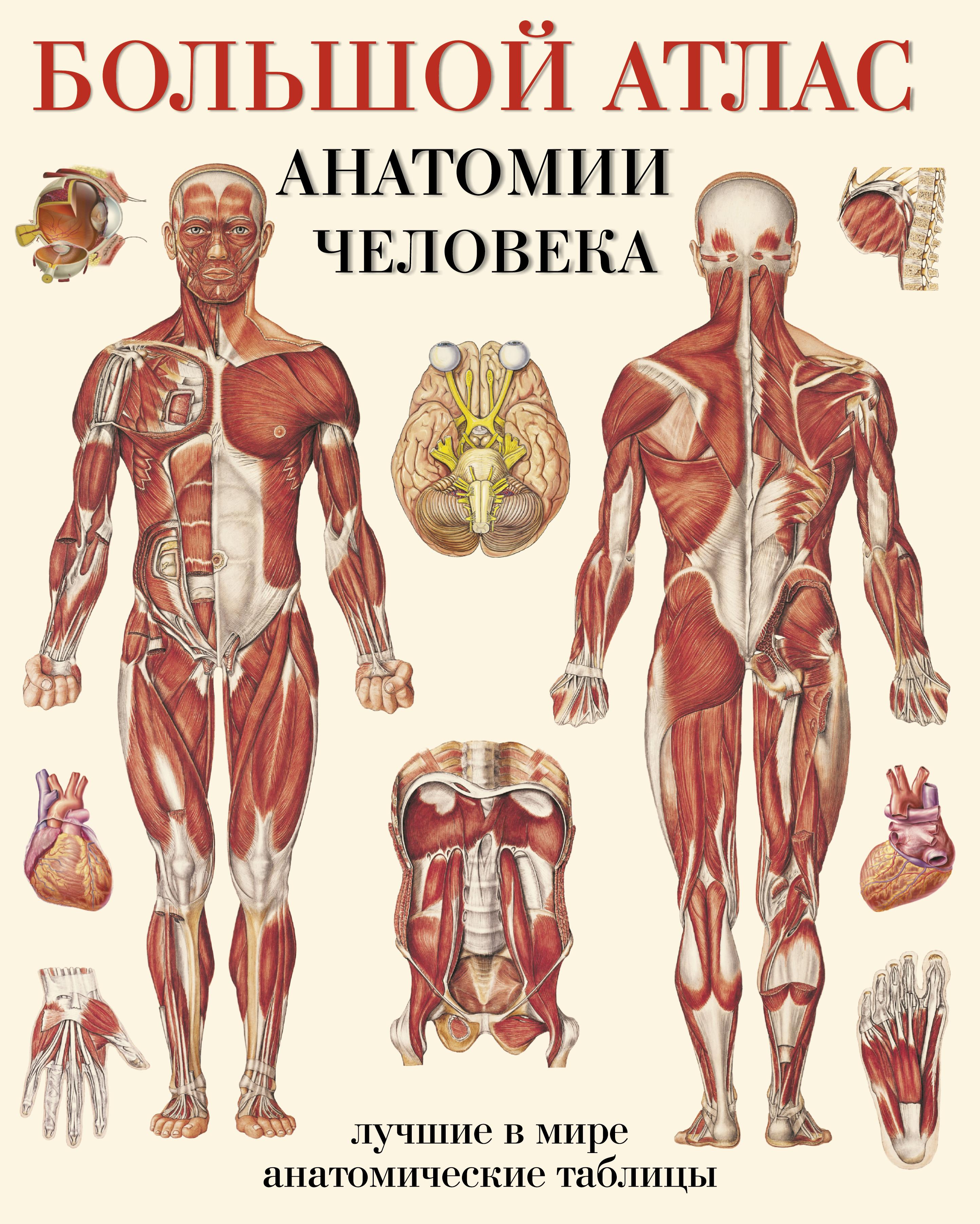 Большой атлас анатомии человека ( Махиянова Е.Б.  )