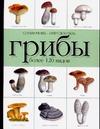 Макарова Н.Е. - Грибы обложка книги