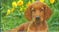 - Календарь-2013(кв.тр)Собака 01.1.1 обложка книги