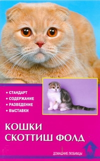 Кошки скоттиш-фолд Шевченко Е.А.