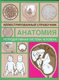 Репродуктивная система человека ( Грабовский В.М.  )