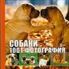 Кондахсазова Динара Робертовна - Собаки. 1001 фотография обложка книги