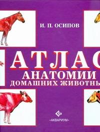 Осипов. И.П - Атлас анатомии домашних животных обложка книги