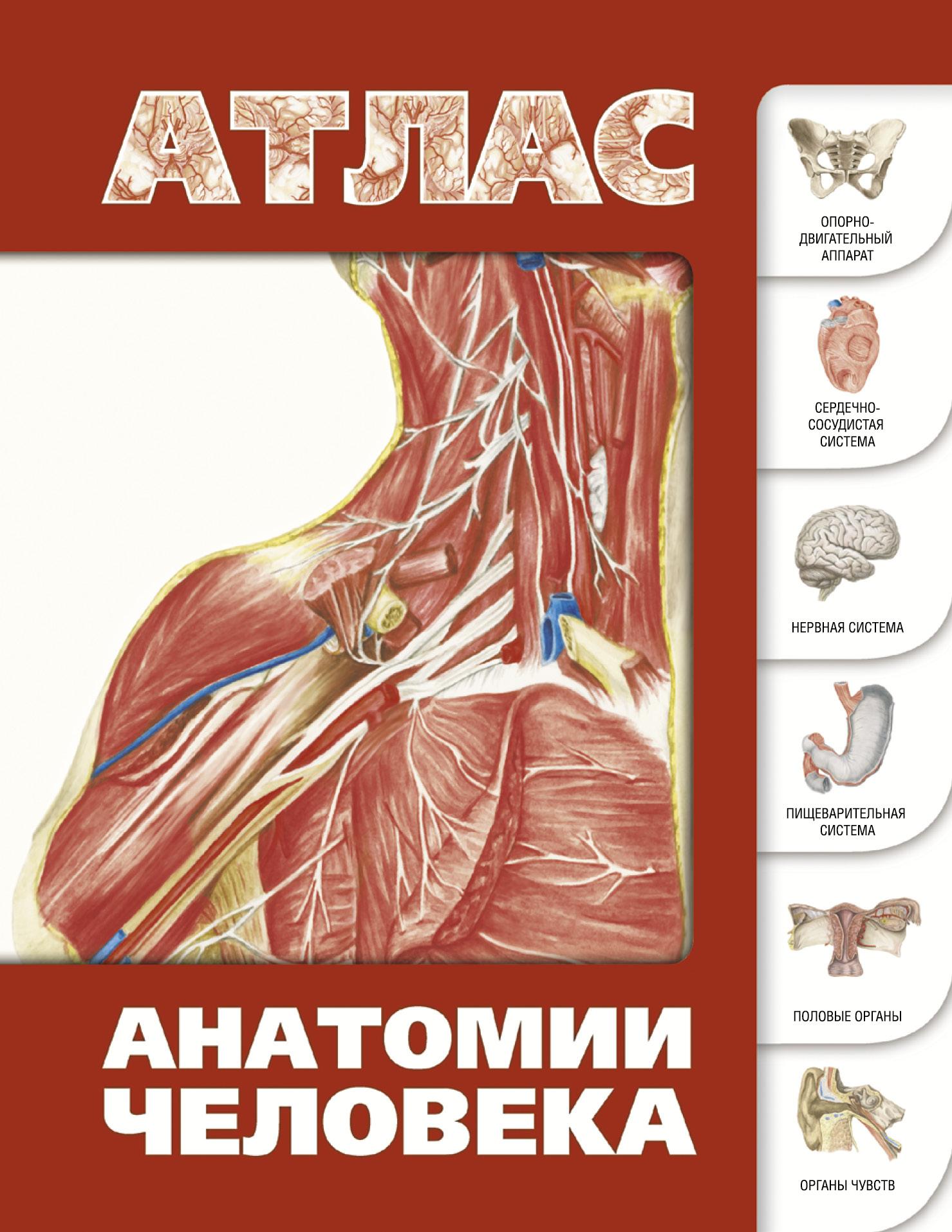 Лёвкин С.С. Атлас анатомии человека карпенко т ред большой иллюстрированный атлас анатомии человека энциклопедический атлас человеческого тела