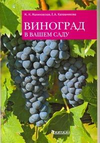 Калашникова Е.А, Малиновская М. Н. - Виноград в вашем саду обложка книги