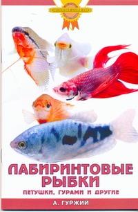 Лабиринтовые рыбки. Петушки, гурами и другие