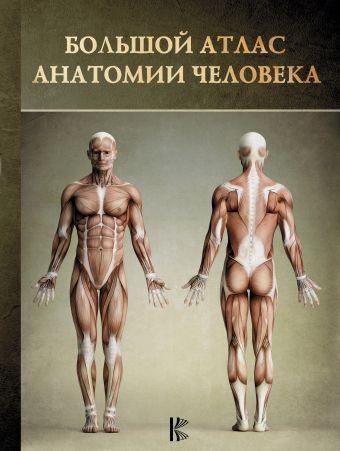 Большой атлас анатомии человека .