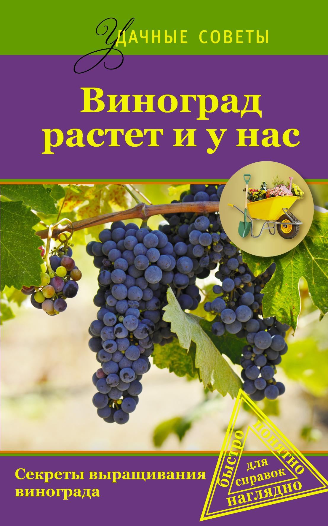 Виноград растет и у нас
