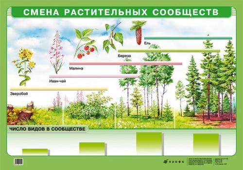 Смена растительных сообществ.(картон)