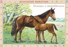 Оверчук Т.И., Сивоглазов В.И., Шляхтина Т.Ю. - Домаш.животные.Корова с телятами/Лошадь с жеребятами.(2) обложка книги