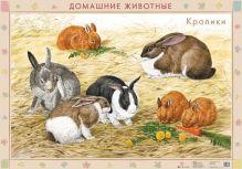 Оверчук Т.И., Сивоглазов В.И. - Домаш.животные.Кролики/Хомяки.(2) обложка книги