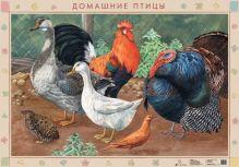 Оверчук Т.И., Сивоглазов В.И. - Домашние птицы.Птичий двор/Пища для домашней птицы.(2) обложка книги