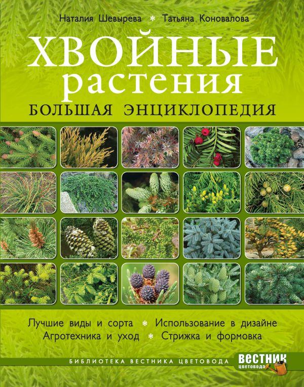 Хвойные растения. Большая энциклопедия Шевырева Н., Коновалова Т.