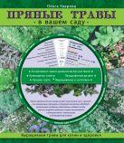 Пряные травы в вашем саду (Садовые шпаргалки)