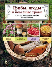 Обложка Грибы, ягоды и полезные травы Ильина Т.А.