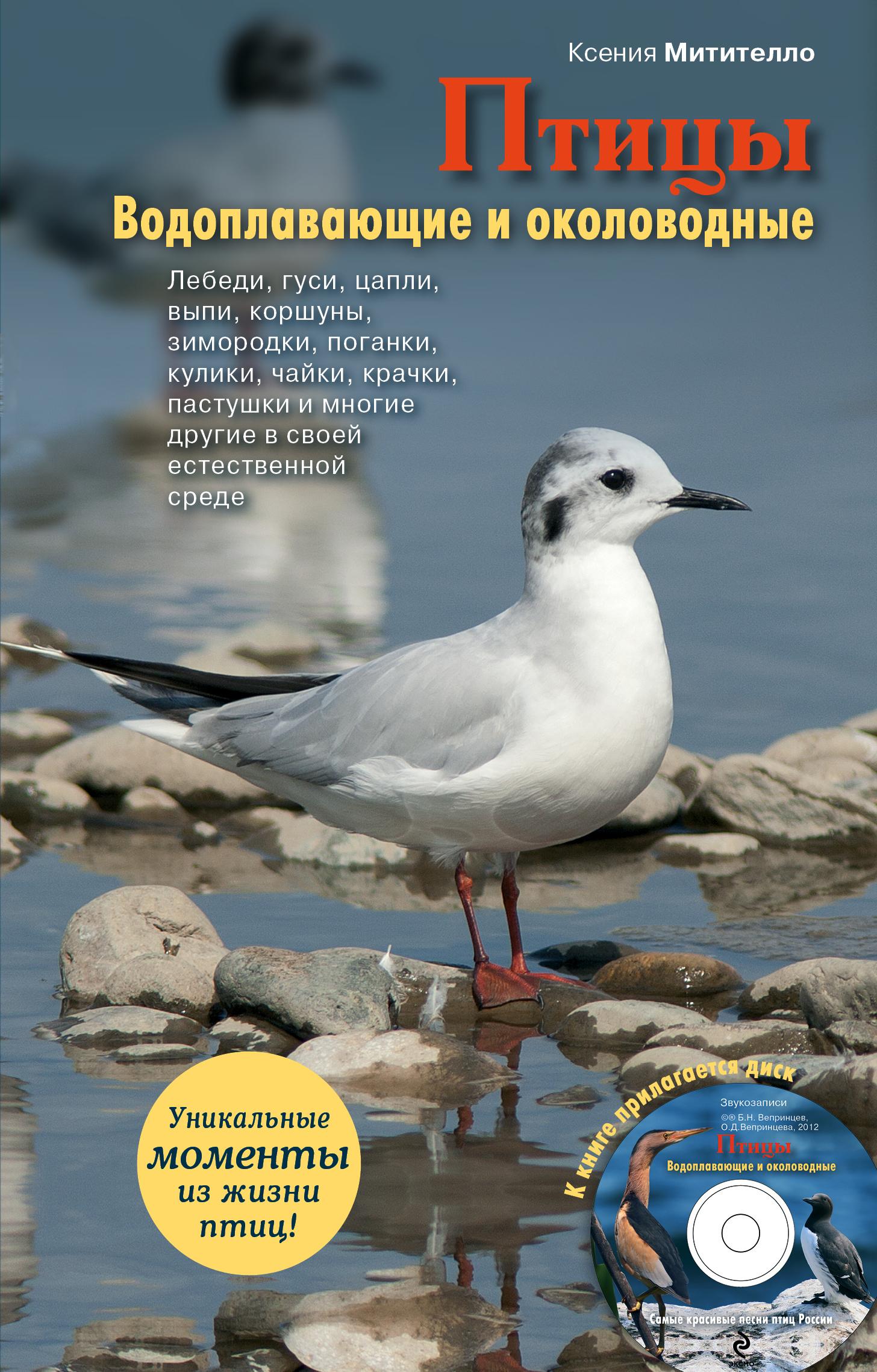 Птицы. Водоплавающие и околоводные (+CD) ( Митителло К.Б.  )