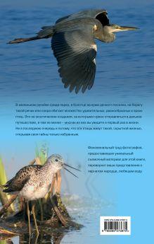 Обложка сзади Птицы. Водоплавающие и околоводные (+CD) Ксения Митителло
