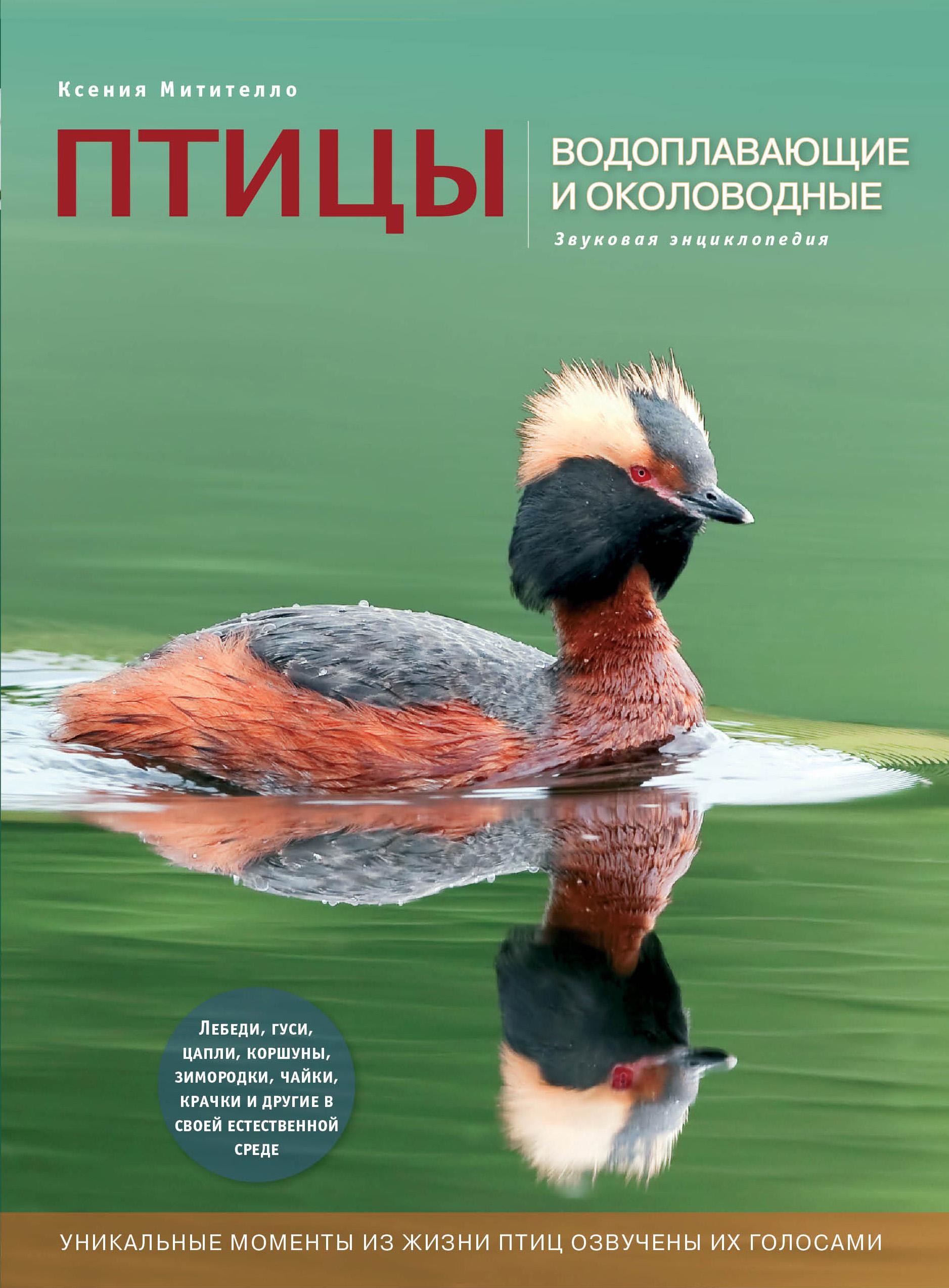 Птицы. Водоплавающие и околоводные (с музыкальным модулем) [утка] (Подарочные издания. Энциклопедии животных) ( Митителло К.Б.  )