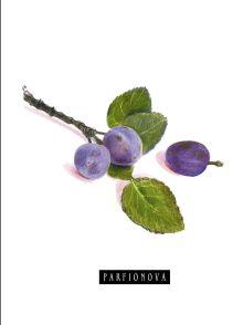 Парфенова Т.В. - Блокнот для записей «Сливы» обложка книги