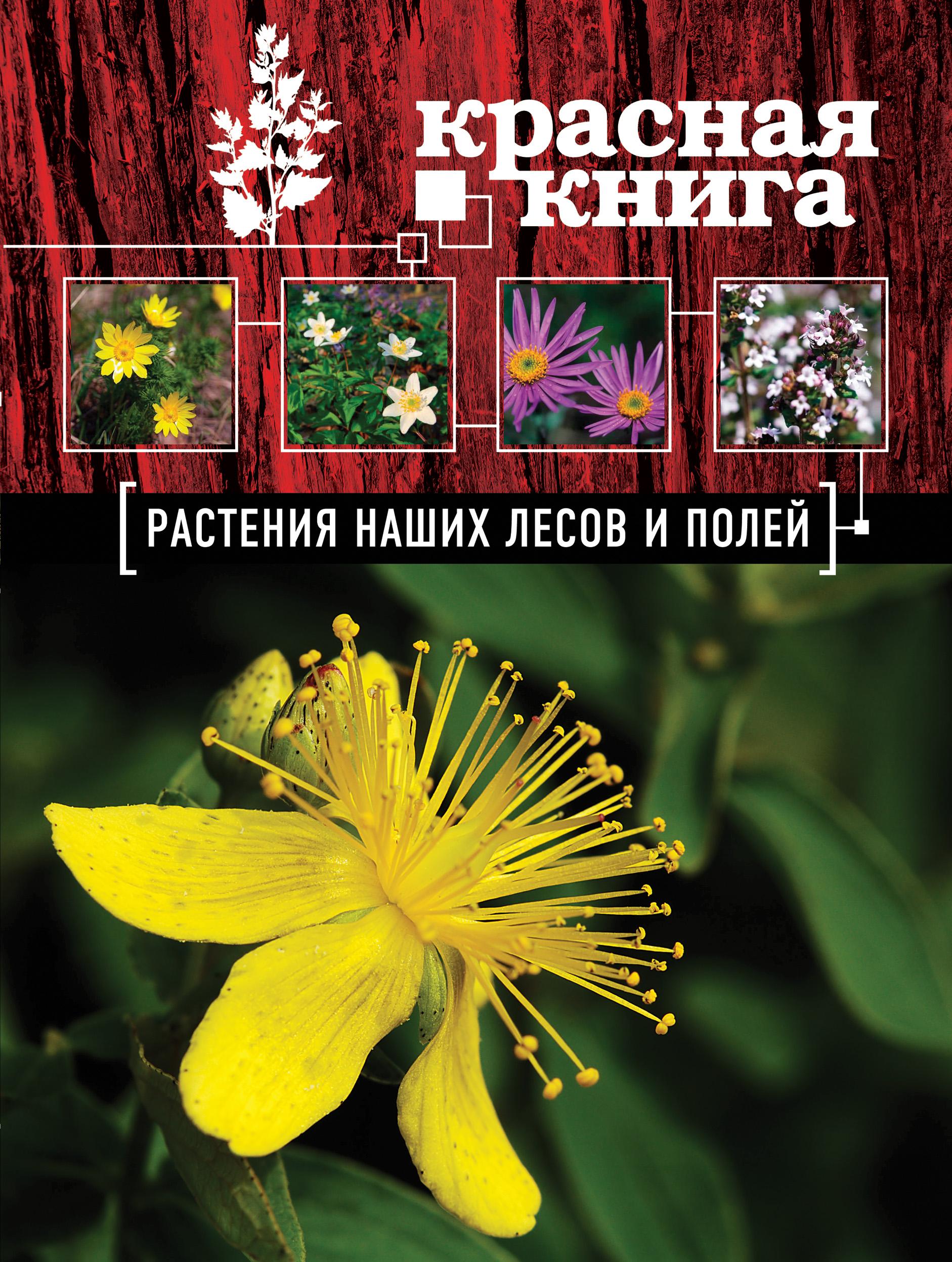 Красная книга. Растения наших лесов и полей ( Орел А.А.  )