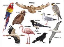 - Птицы обложка книги