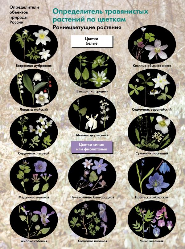 Определитель травянистых растений по цветкам. Раннецветущие растения. 6-11кл. Буклет. Изд.1