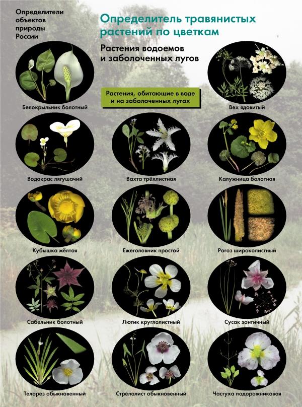 Биология. 6-11классы. Определитель травянистых растений по цветкам. Растения водоемов и заболоченных лугов. Буклет ( БоголюбовА.С.  )