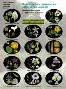 Биология. 6-11классы. Определитель травянистых растений по цветкам. Растения водоемов и заболоченных лугов. Буклет