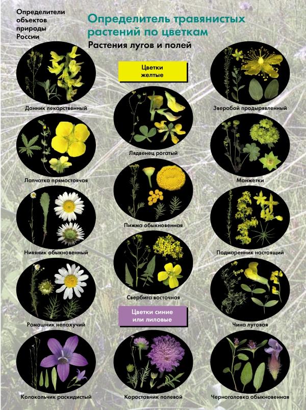 Определитель травянистых растений по цветкам. Растения лугов и полей. 6-11классы. Буклет.