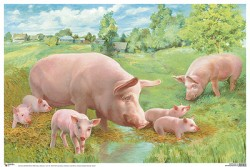 ПЛ Свинья с поросятами