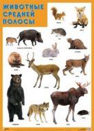 ПЛ Животные средней полосы